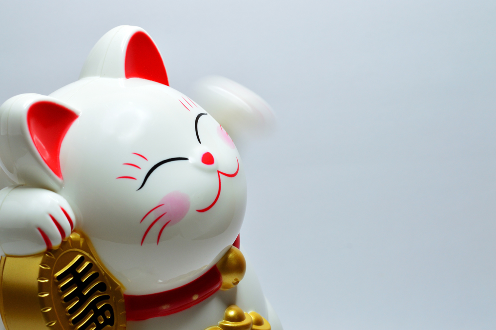 Uśmiechnięty i zadowolony kot, który otrzymał kieszonkowe