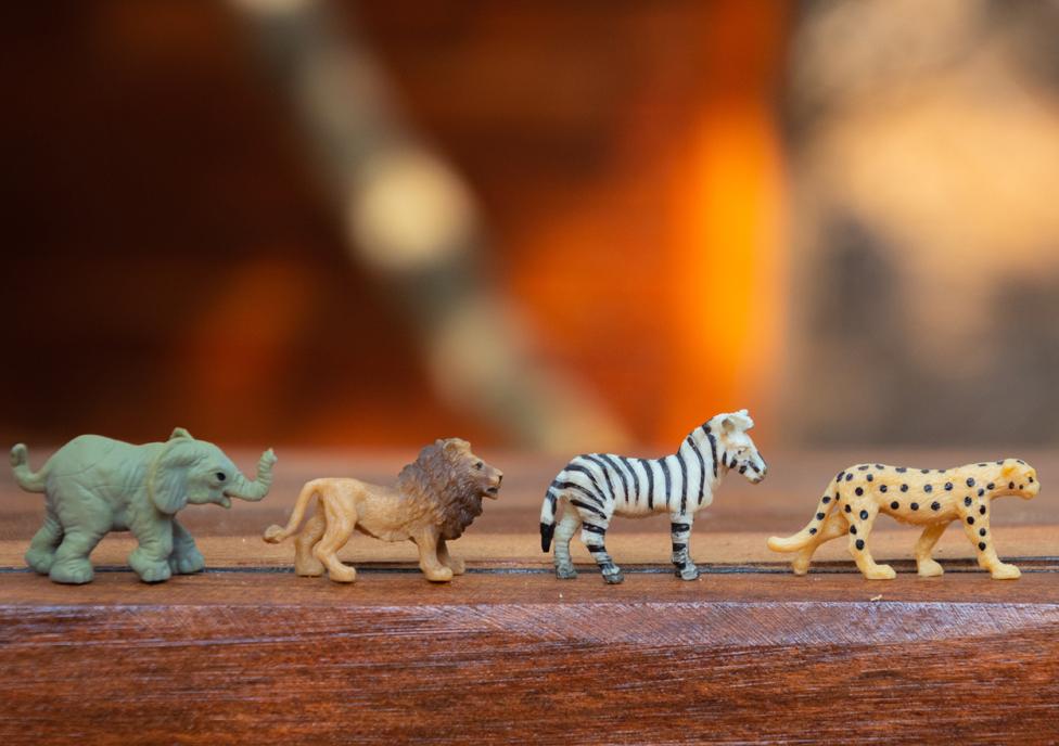 4 zwierzęta słon, zebra, lew oraz pantera na zdjęciu. Każde ze zwierząt ma 4 nogi